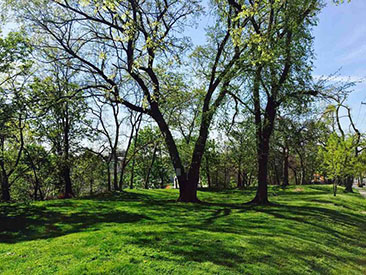 Bergen Hill Park - emerald green spring in our community